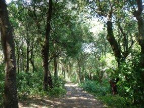 Privado, Sintra. Antes da limpeza florestal.