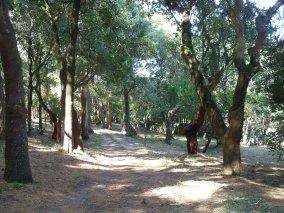 Privado, Sintra. Após a limpeza florestal.